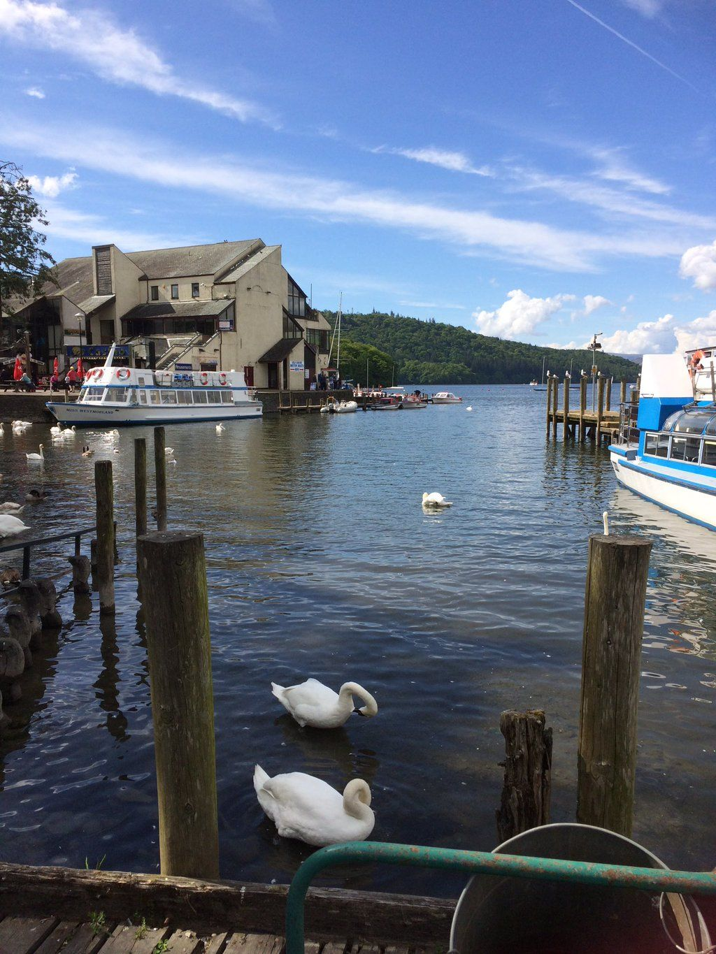 Watching the Swans on Lake Windermere