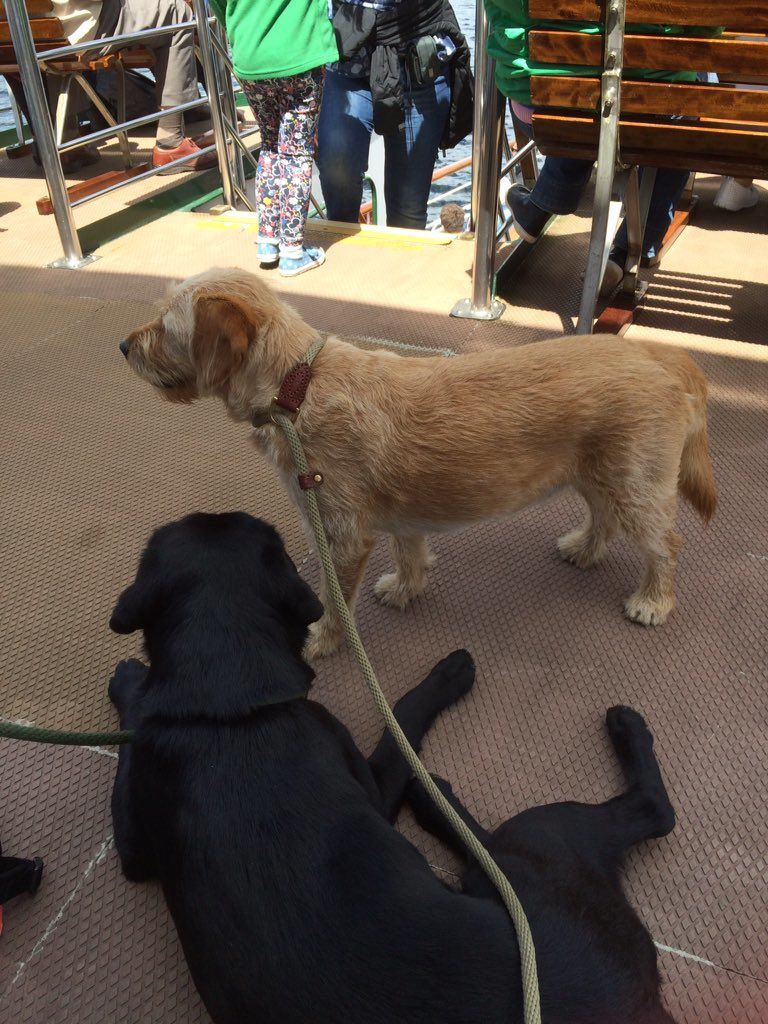 Ellie & Roxy enjoying the boat ride along lake Windermere!