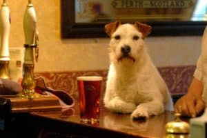 Dog Friendly Pubs in The Lake District